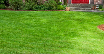 Lawn Fertilization & Lawn Weed Control Services